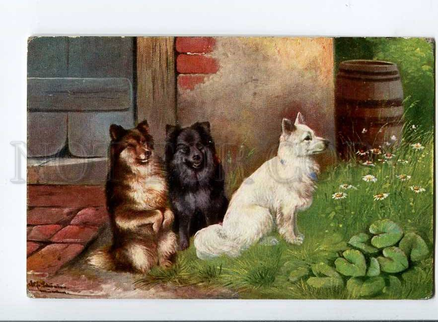 3013661-Puppies-of-SPITZ-Dogs-by-SCHONIAN-vintage-TSN-Publ